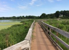 McKusick Lake Boardwalk